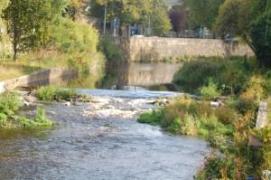 A Trout Stream in Dublin