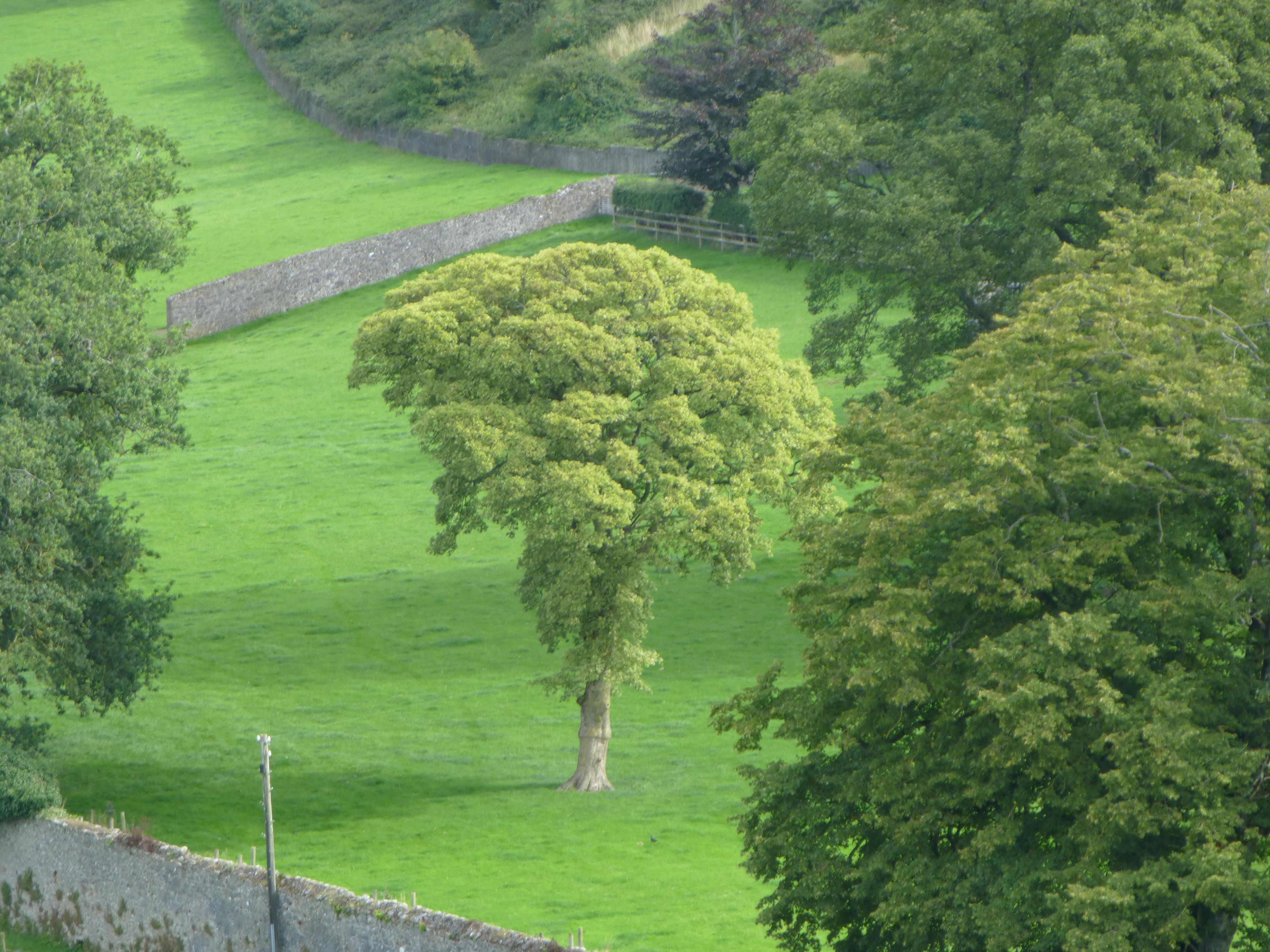 Why A Tree An Focal Beag Agus Bog